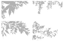 Set Of Transparent Shadow Effects For Branding. Shadow Lining For The Mock-up Presentations.The Shadow Of Tree Branches For A Natural Lighting Effects