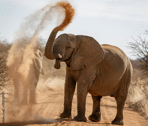 Elephant throws dirt onto its back in order thwart parasites Canvas Print