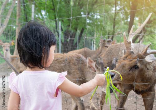 Photo  Child feeding wild deer at petting zoo