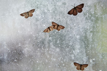 Several Moths Are Sitting On A...