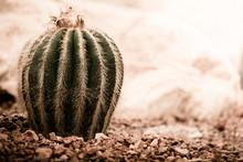 Cactus In The Desert Under, Se...