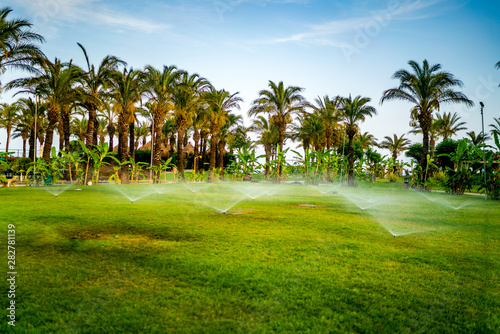 Cadres-photo bureau Palmier Gardening details - automatic lawn watering system with pop-up sprinklers