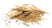Wheat Ears And Kernels Isolated On White Background