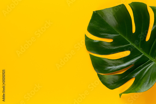 Poster Pays d Europe Tropical Jungle Leaf, Monstera, resting on flat surface, on yellow background.