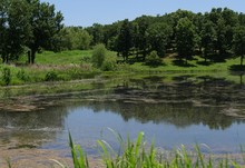 Roadside View Of A Lake At Chickasaw National Recreation Area In Davis, Oklahoma