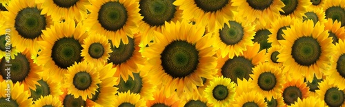Foto op Canvas Zonnebloem High resolution panoramic photo montage of individually colour graded Sunflowers