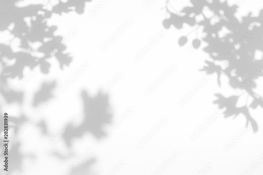 Fototapeta Gray shadow of the hawthorn tree leaves on a white wall. Abstract neutral nature concept blurred background. Space for text. Overlay effect for photos and mockups.