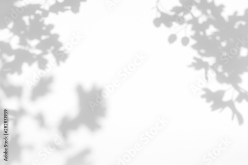 Fototapety, obrazy: Gray shadow of the hawthorn tree leaves on a white wall. Abstract neutral nature concept blurred background. Space for text. Overlay effect for photos and mockups.
