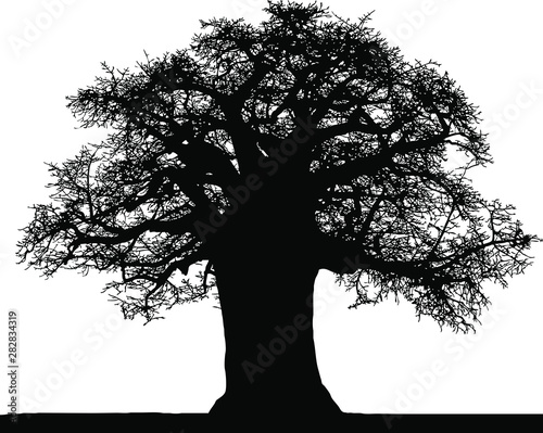 Obraz na plátne Black silhouette of a baobab in vector on a white background.