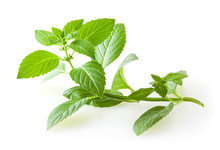 Fresh Mint Leaves Isolated On ...