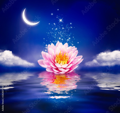 Foto auf Leinwand Lotosblume Beautiful magic flower on water. Waterlily or lotus and moon in night.