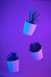 canvas print picture - House plants, succulents suspended in the air on color background