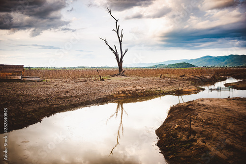 Fotomural  The water in canal is drying and tree is standing dead, Water crisis and Climate change or drought concept