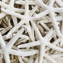 Travel And Summer Concept. Beautiful Marine White Five-finger Starfishes. Exotic Texture And Pattern. Flat Lay, Top View.