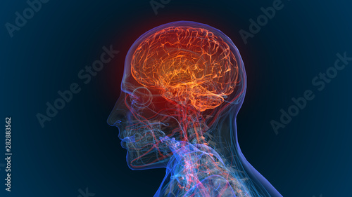 Valokuvatapetti 3d rendered illustration of  brain tumor and brain disease 3D illustration