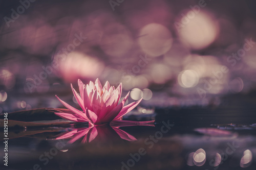 Poster de jardin Nénuphars Water Lily Or Lotus Flower Floating On The Water