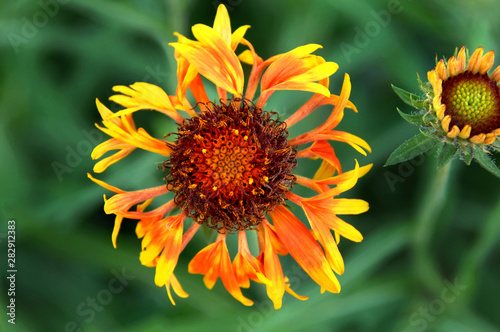 Closeup of Yellow and Orange Flower