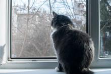 Grey Cat Looking Through Window Mosquito Net Closeup