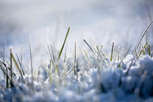 Morning Sunlight On Grass Covered With Snow. Selective Focus.