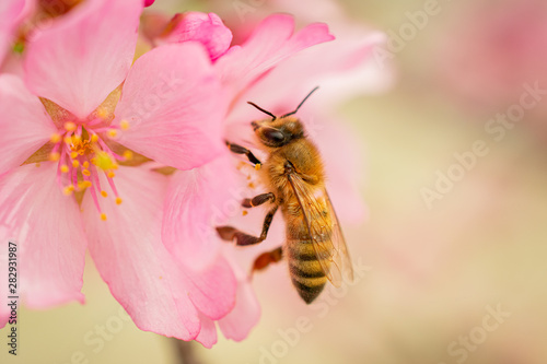 Warm Colors Macro Bee