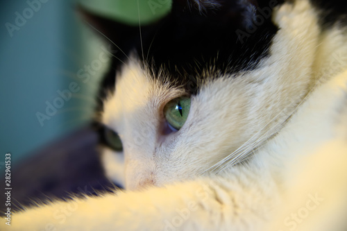 Closeup of domestic house cat.