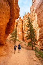 Two Adult Women Hiking In Bryce Canyon National Park, Utah, USA While On Vacation. Candid Photo, View From Behind