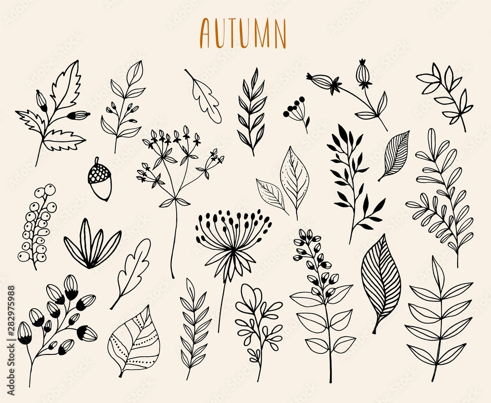 Fototapety, obrazy: Hand drawn autumn  collection with seasonal plants and leaves