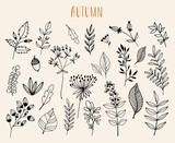 Hand drawn autumn  collection with seasonal plants and leaves