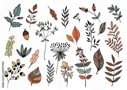 Canvastavla  Hand drawn collection with different seasonal plants, isolated, vector design