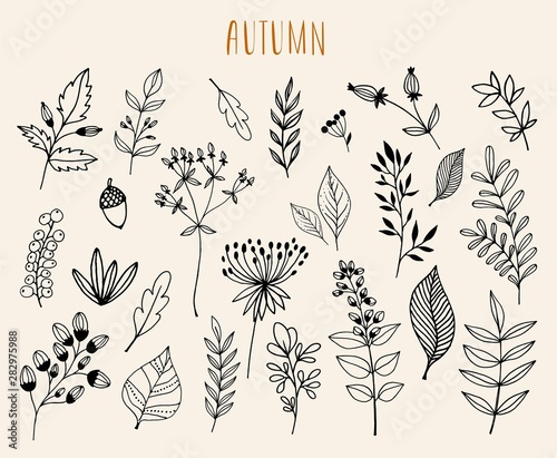 Foto  Hand drawn autumn  collection with seasonal plants and leaves