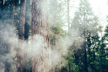 Fire Smoke In Sequoia Redwood ...