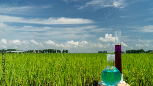 Image of a glass flask with a chemical solution on the background of young rice shoots Canvas Print