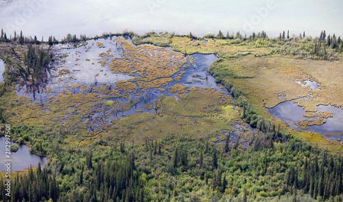 Fotografija  Riparian sub-arctic boreal forest taiga wetland