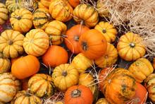 Autumn Decoration Pumpkins