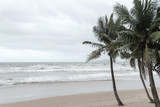 the coconut trees on the beach in the storm - 283008967