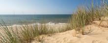 Panorama Shot Of Beach Grass I...