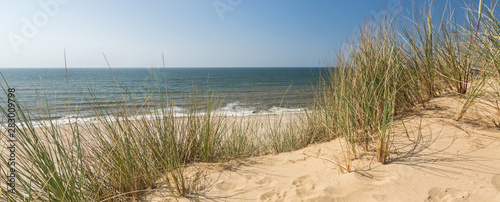 Foto  Panorama shot of beach grass in dune landscape with beach and ocean in the backg