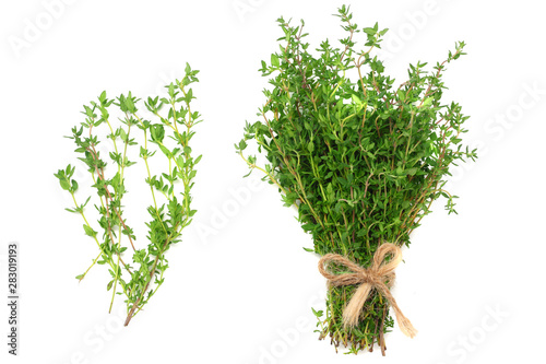 green thyme bunch isolated on white background. top view Canvas Print