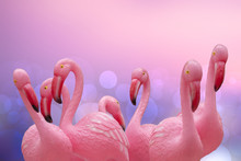 Flamingo Background. Close-up ...