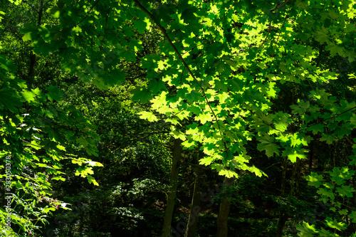 Cuadros en Lienzo treetop view in valley aisttal near pregarten, mühlviertel, upper austria