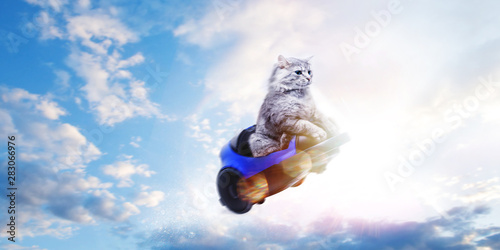 Cute gray cat in toy car flying on blue sky background. Follow your dream concept.