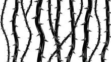 Black Thorns Background