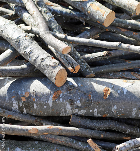 wood logs cut to be used as fuel to heat mountain homes during c #283068976
