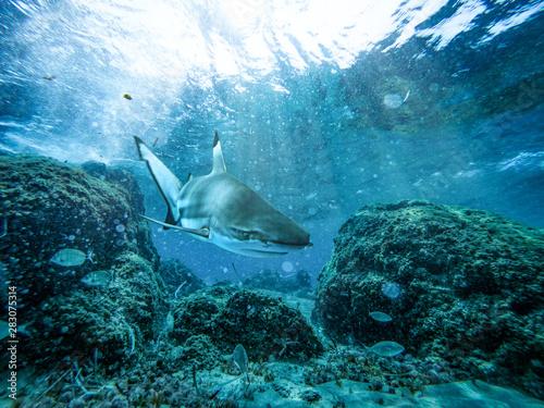 Leinwanddruck Bild - magdal3na : Underwater ocean background with a shark