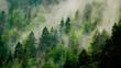 canvas print picture - Nebel in den Bäumen am Berghang