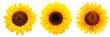 canvas print picture - Drei Sonnenblumen isoliert auf weißem Hintergrund