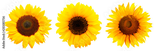 Fotobehang Zonnebloem Drei Sonnenblumen isoliert auf weißem Hintergrund
