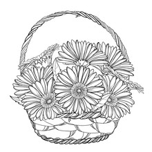 Bouquet Of Outline Gerbera Or Gerber Flower And Leaf In Wicker Basket In Black Isolated On White Background.