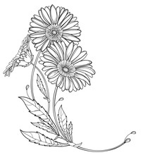 Corner Bouquet With Outline Gerbera Or Gerber Flower And Leaf In Black Isolated On White Background.