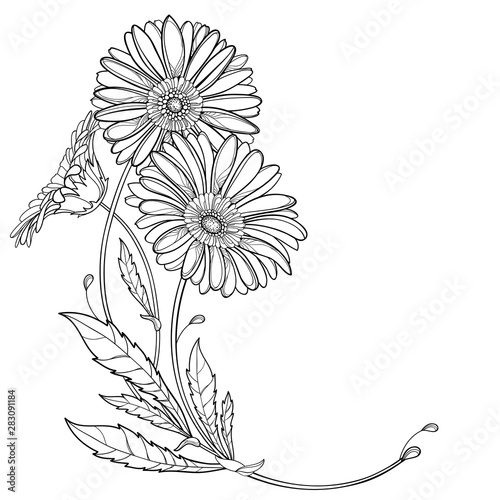 Fotografie, Obraz Corner bouquet with outline Gerbera or Gerber flower and leaf in black isolated on white background